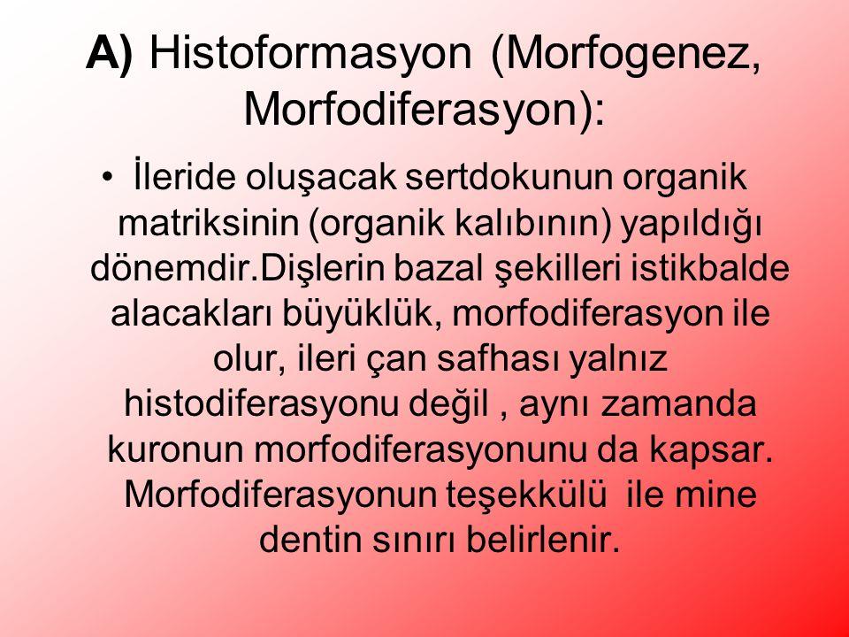 A) Histoformasyon (Morfogenez, Morfodiferasyon):