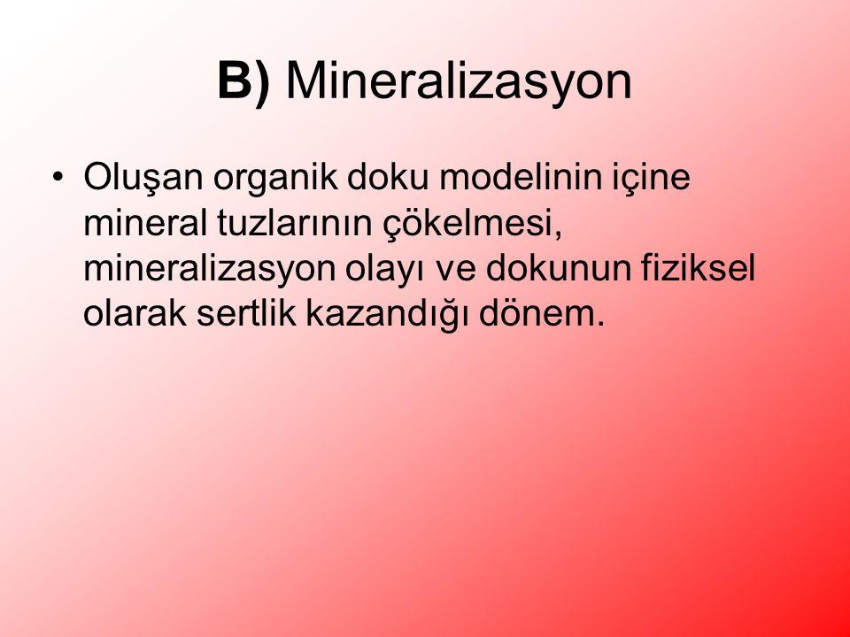 B) Mineralizasyon