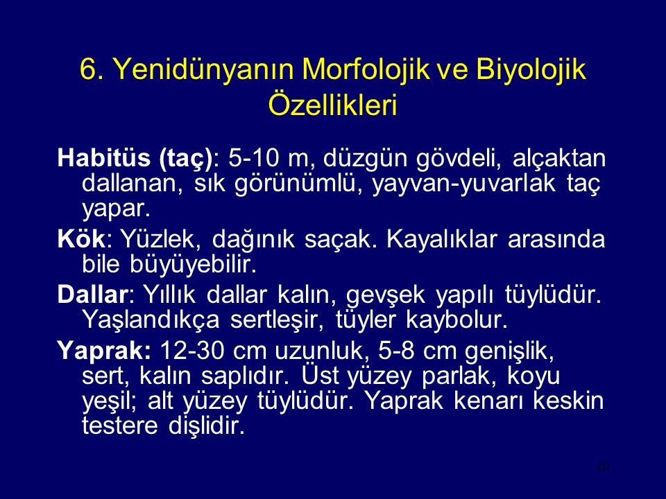6. Yenidünyanın Morfolojik ve Biyolojik Özellikleri