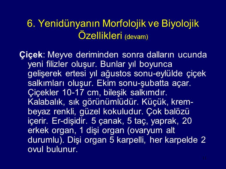 6. Yenidünyanın Morfolojik ve Biyolojik Özellikleri (devam)
