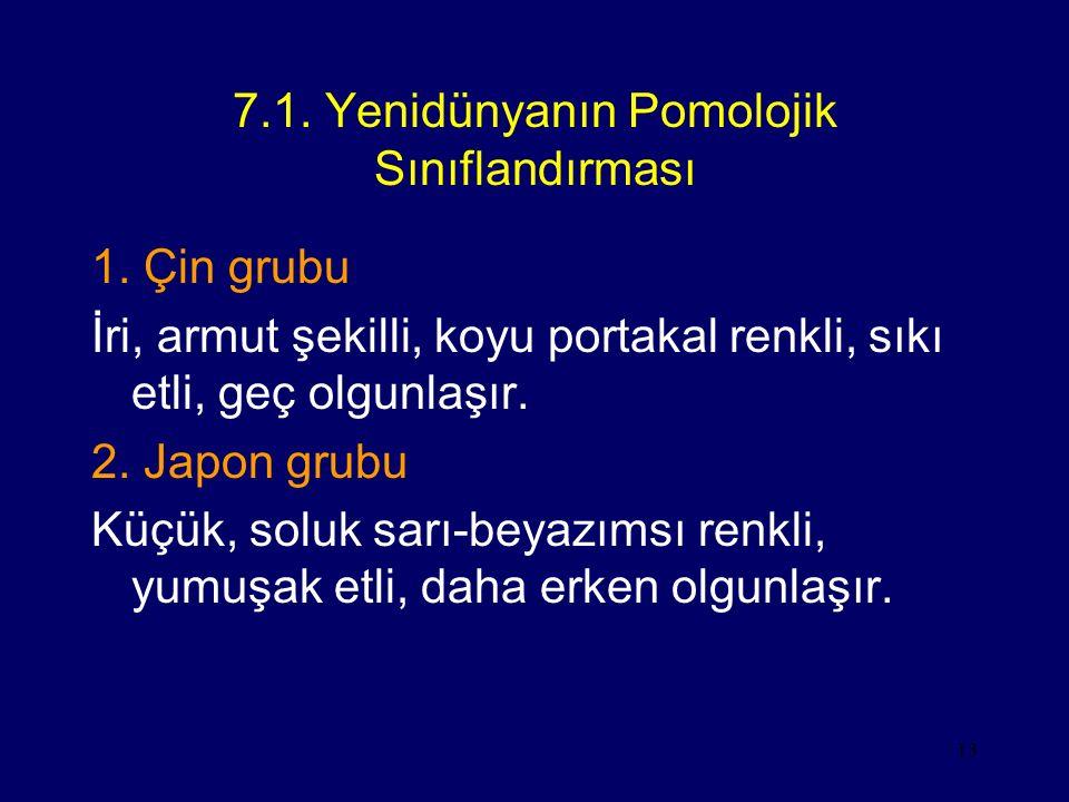 7.1. Yenidünyanın Pomolojik Sınıflandırması