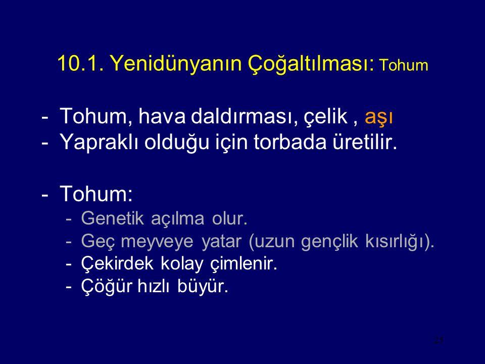 10.1. Yenidünyanın Çoğaltılması: Tohum