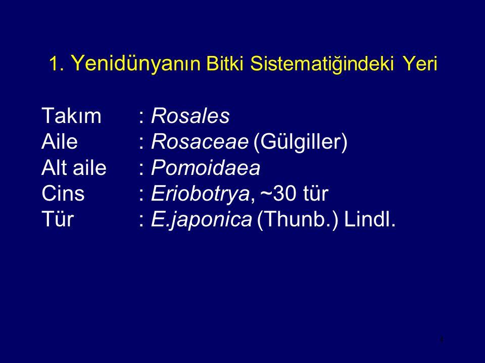 1. Yenidünyanın Bitki Sistematiğindeki Yeri