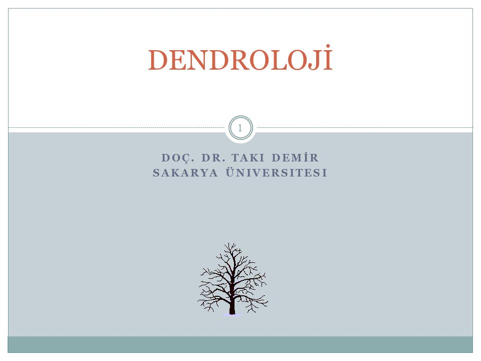 Doç. Dr. Taki DEMİR Sakarya Üniversitesi