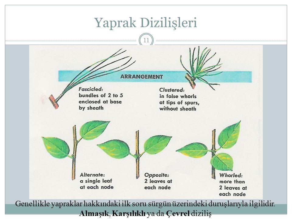 Yaprak Dizilişleri Genellikle yapraklar hakkındaki ilk soru sürgün üzerindeki duruşlarıyla ilgilidir.
