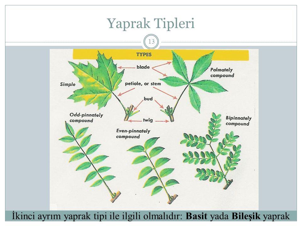 Yaprak Tipleri İkinci ayrım yaprak tipi ile ilgili olmalıdır: Basit yada Bileşik yaprak