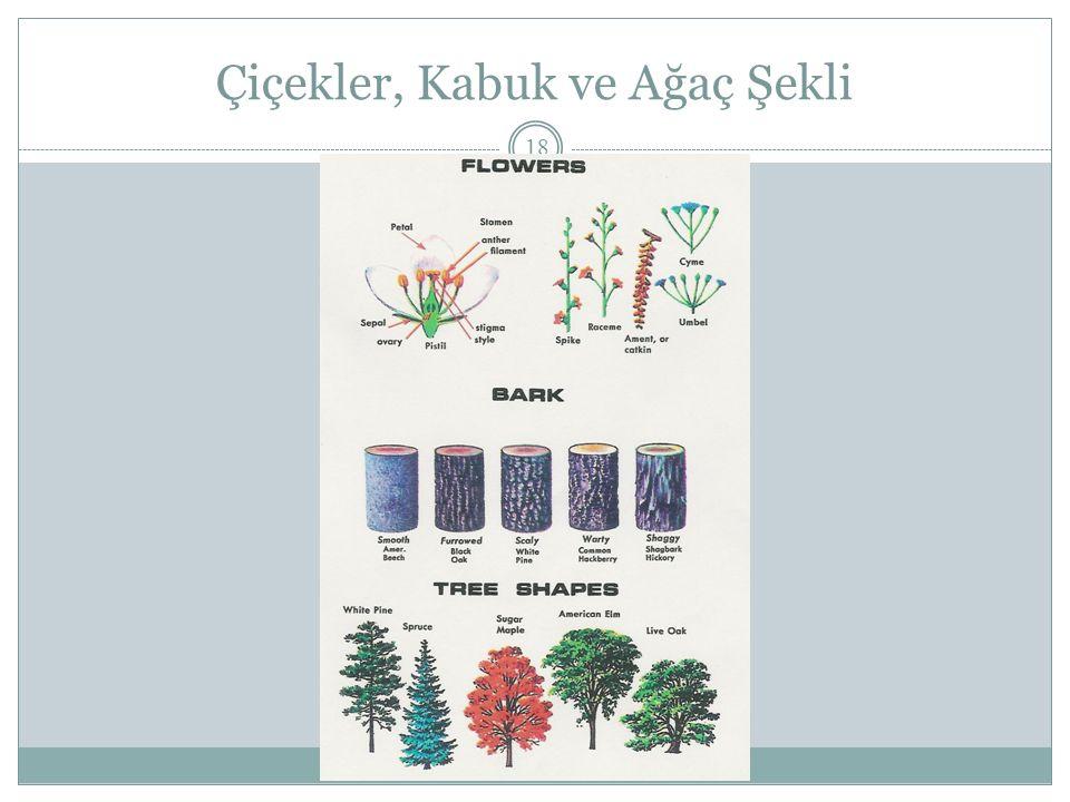 Çiçekler, Kabuk ve Ağaç Şekli