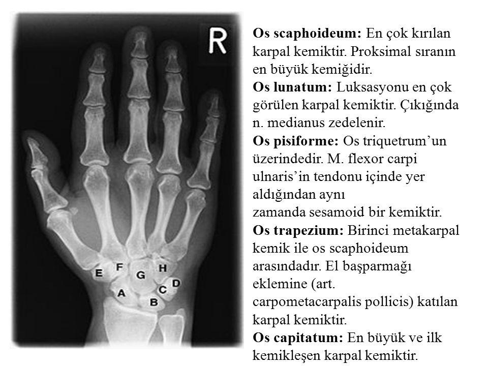 Os scaphoideum: En çok kırılan karpal kemiktir