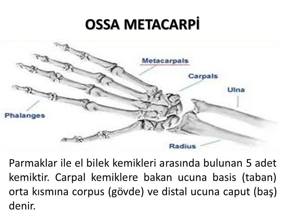 OSSA METACARPİ