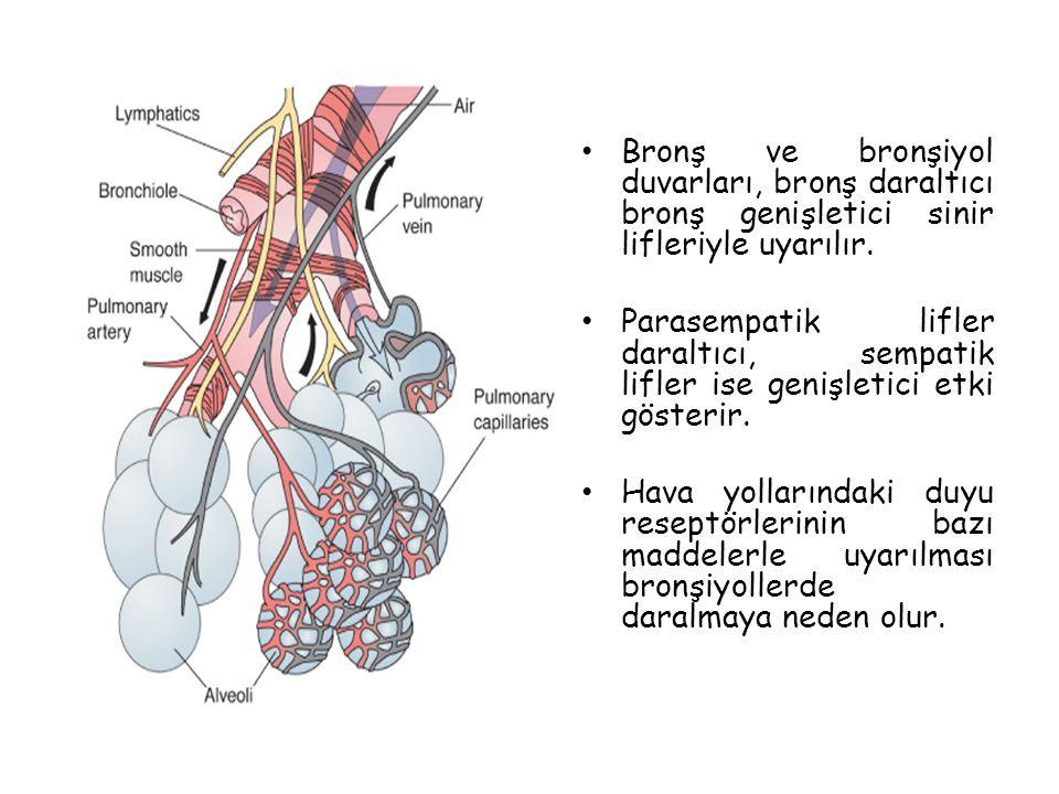 Bronş ve bronşiyol duvarları, bronş daraltıcı bronş genişletici sinir lifleriyle uyarılır.