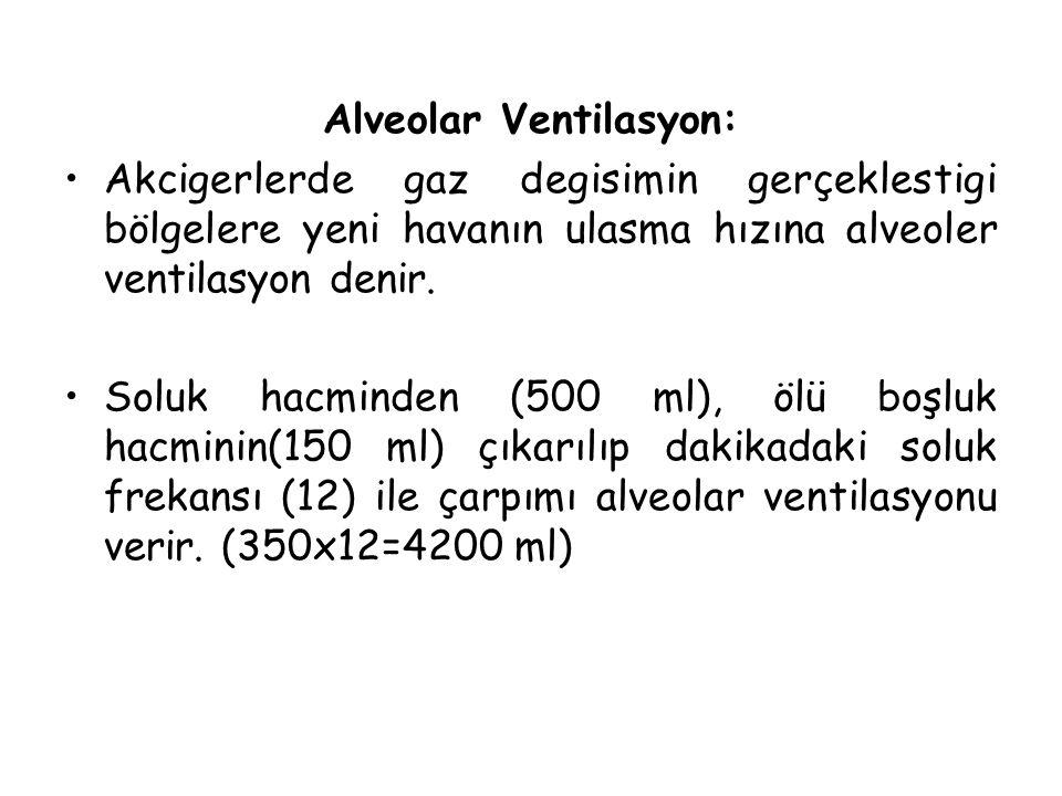 Alveolar Ventilasyon: