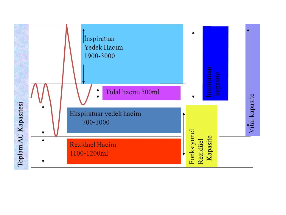 İnspiratuar Yedek Hacim. 1900-3000. Inspiratuar. kapasite. Vital kapasite. Tidal hacim 500ml. Toplam AC Kapasitesi.