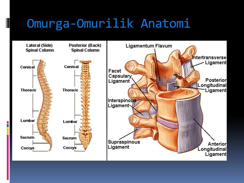 Omurga-Omurilik Anatomi