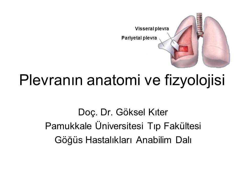 Plevranın anatomi ve fizyolojisi
