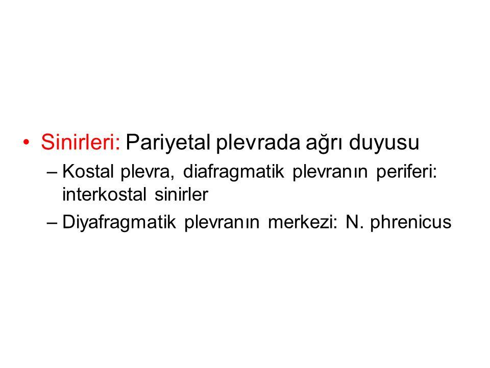 Sinirleri: Pariyetal plevrada ağrı duyusu