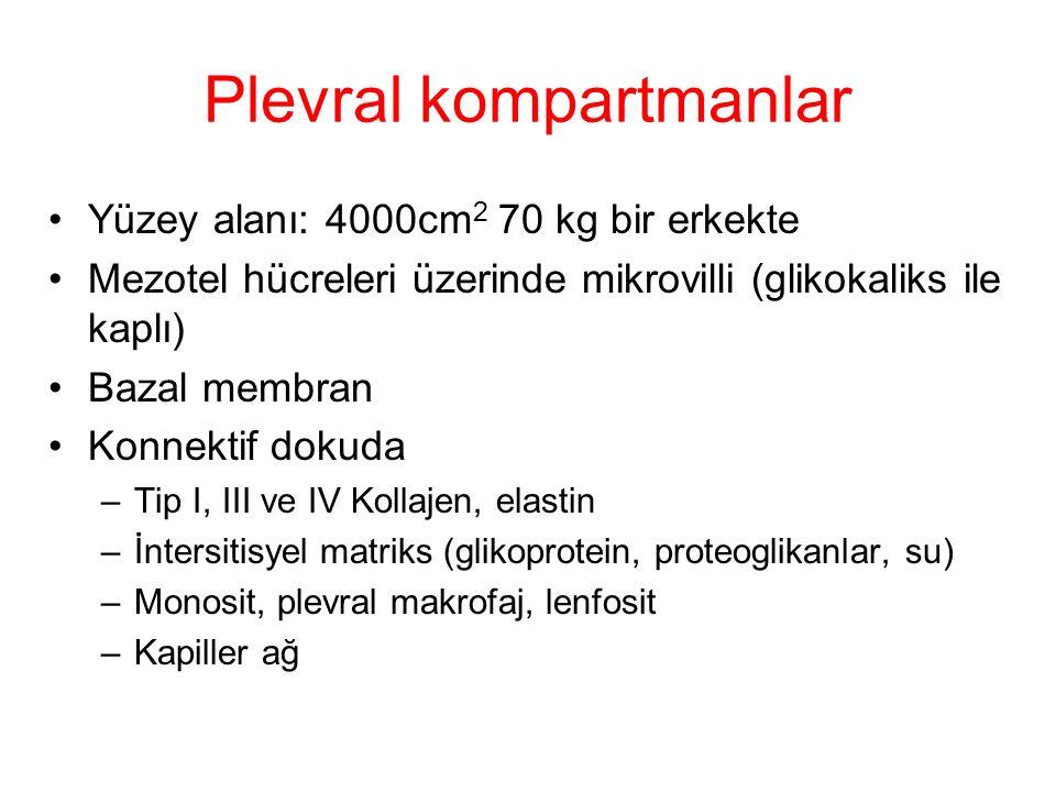 Plevral kompartmanlar