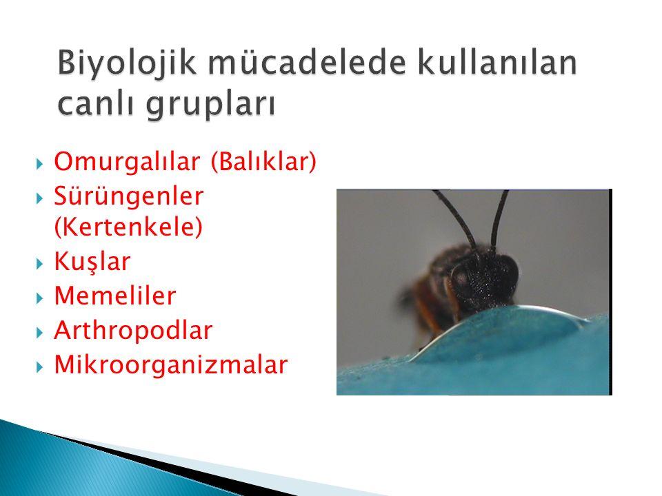 Biyolojik mücadelede kullanılan canlı grupları