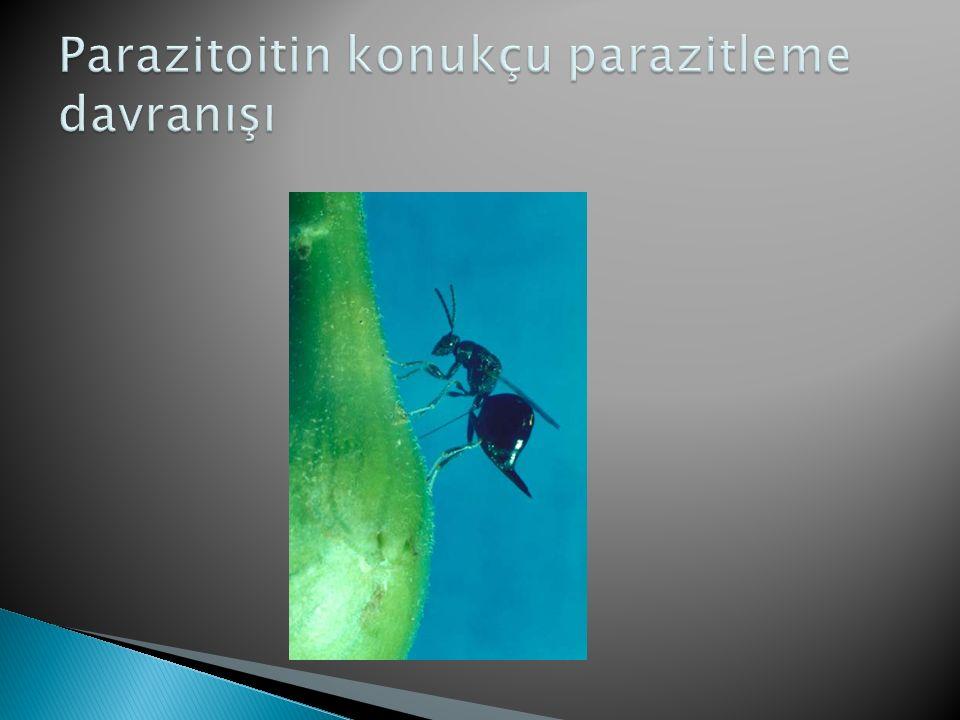 Parazitoitin konukçu parazitleme davranışı