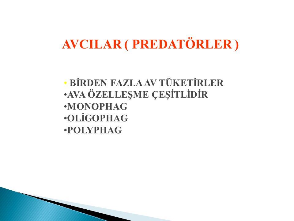AVCILAR ( PREDATÖRLER )