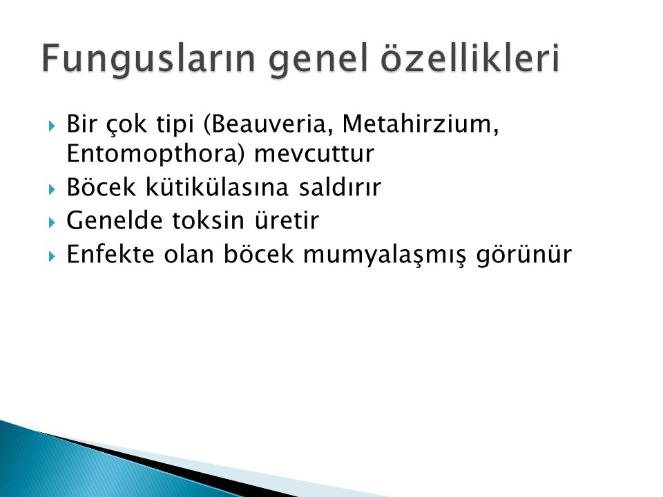 Fungusların genel özellikleri