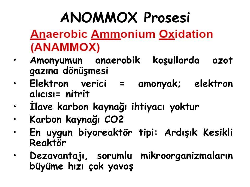 ANOMMOX Prosesi Amonyumun anaerobik koşullarda azot gazına dönüşmesi