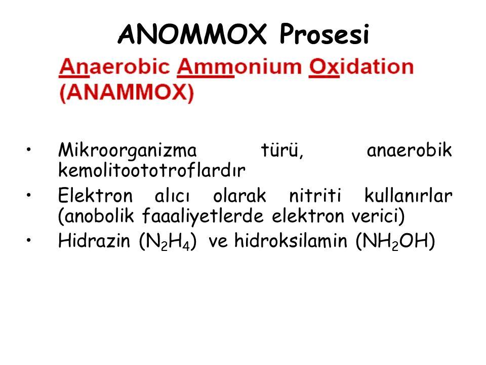 ANOMMOX Prosesi Mikroorganizma türü, anaerobik kemolitoototroflardır