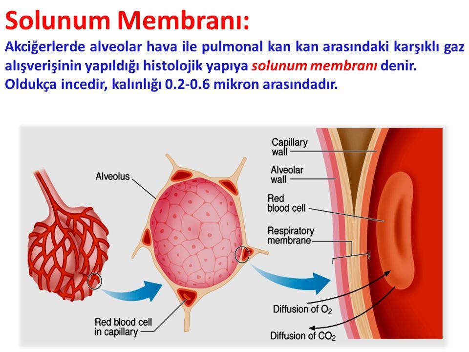 Solunum Membranı: