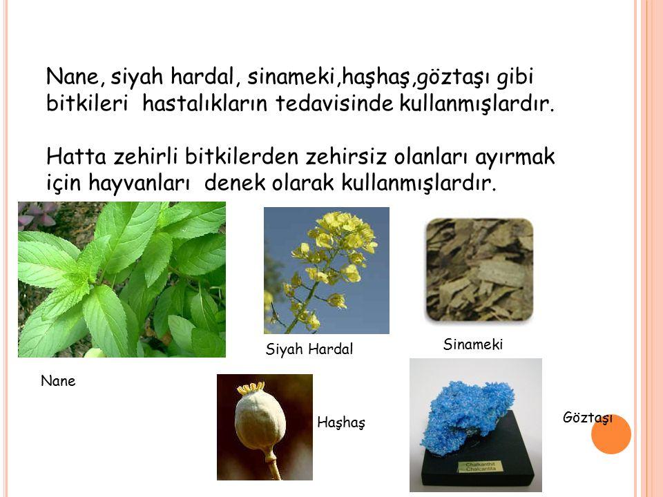 Nane, siyah hardal, sinameki,haşhaş,göztaşı gibi bitkileri hastalıkların tedavisinde kullanmışlardır.