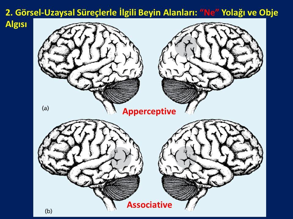 2. Görsel-Uzaysal Süreçlerle İlgili Beyin Alanları: Ne Yolağı ve Obje Algısı