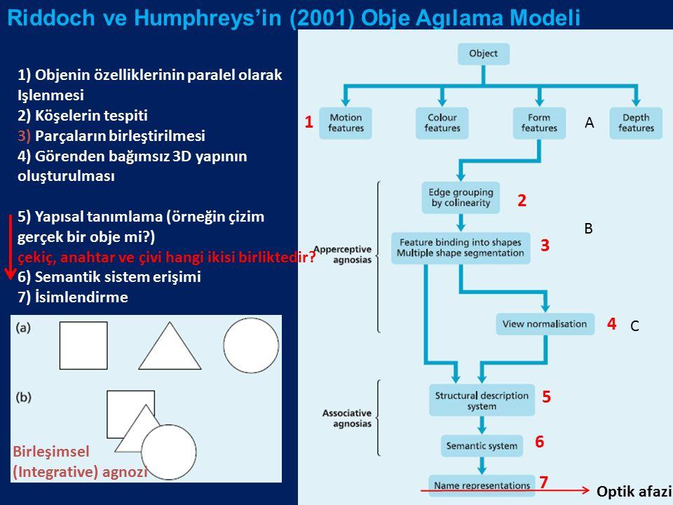 Riddoch ve Humphreys'in (2001) Obje Agılama Modeli