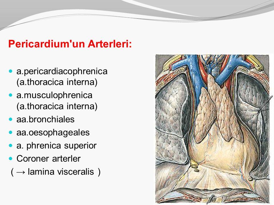 Pericardium un Arterleri: