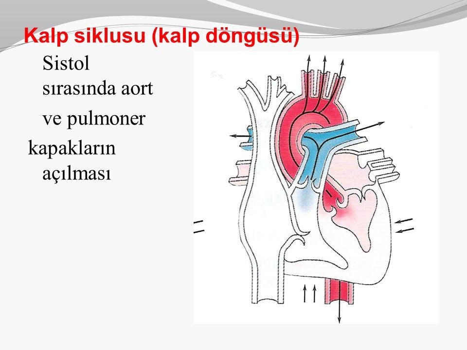 Kalp siklusu (kalp döngüsü)