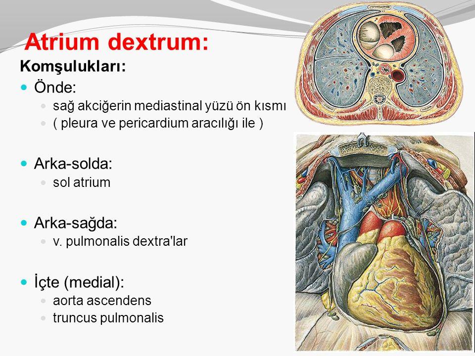 Atrium dextrum: Komşulukları: Önde: Arka-solda: Arka-sağda: