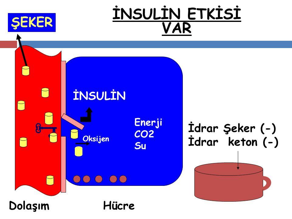 . İNSULİN ETKİSİ VAR ŞEKER İNSULİN İdrar Şeker (-) İdrar keton (-)