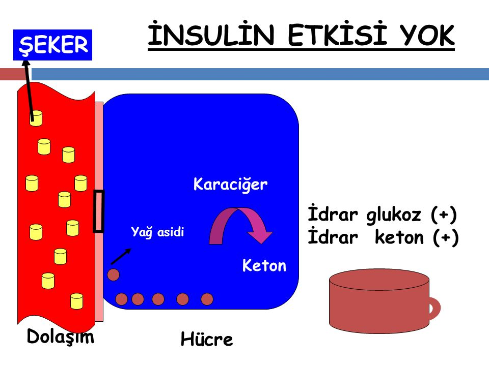 İNSULİN ETKİSİ YOK ŞEKER İdrar glukoz (+) İdrar keton (+) Dolaşım