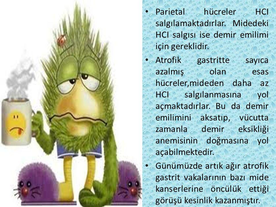 Parietal hücreler HCI salgılamaktadırlar