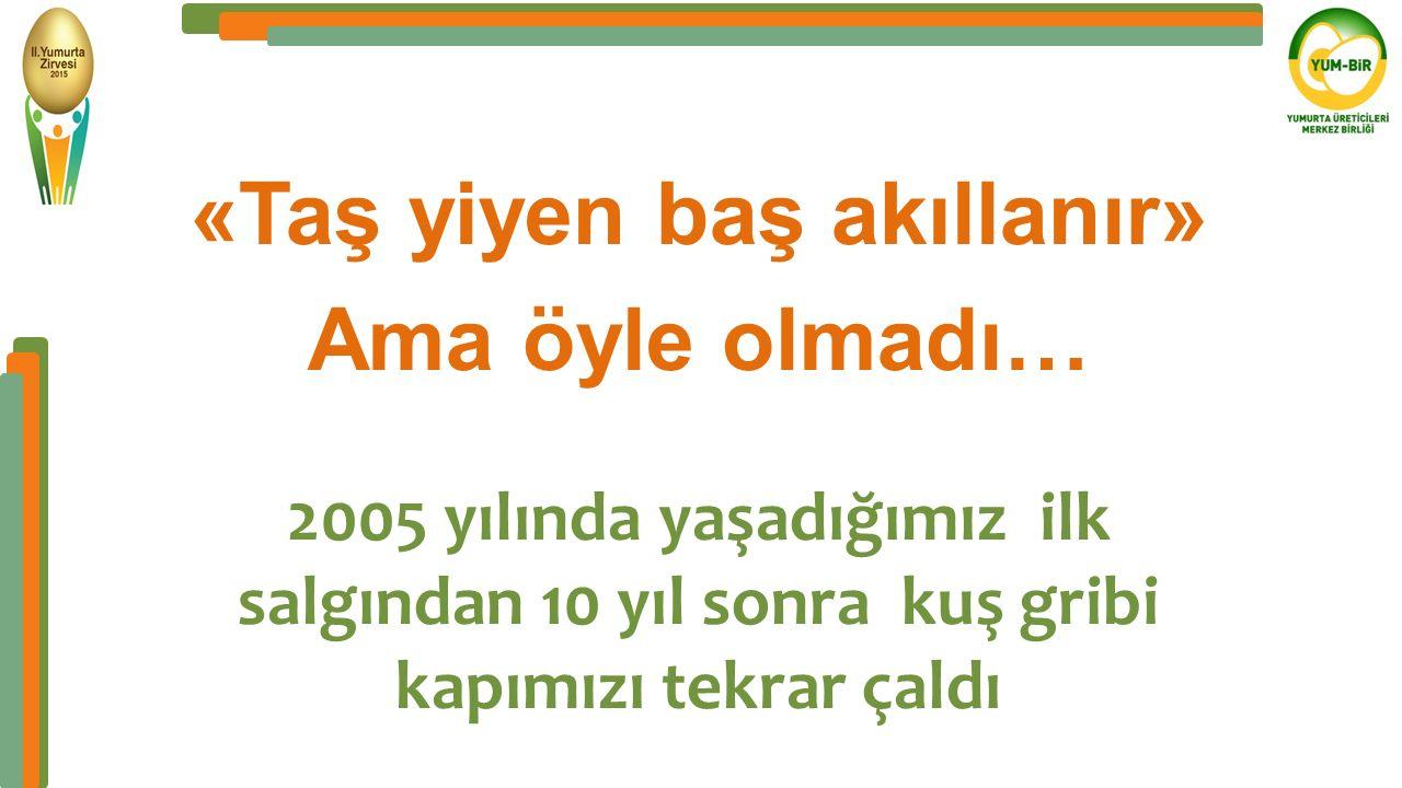 5 - Türkiye'de ilk Kuş Gribi salgını «Taş yiyen baş akıllanır»