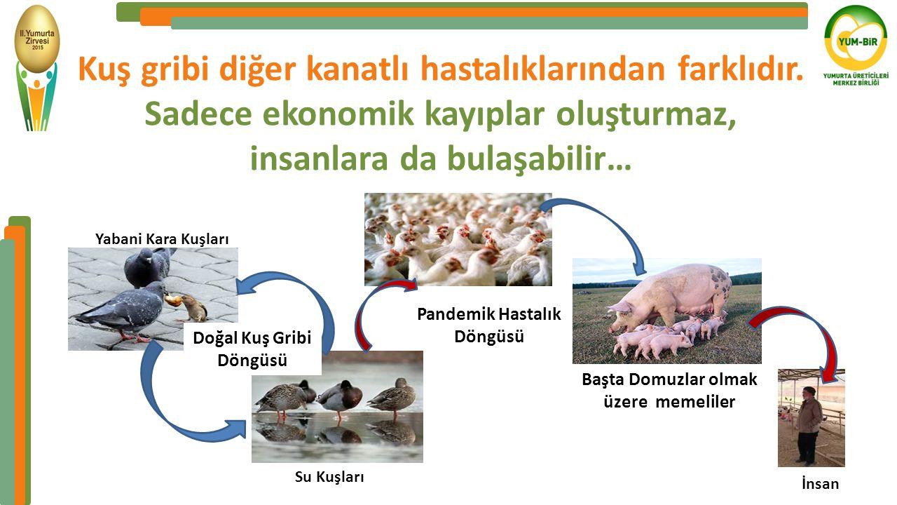 Kuş gribi diğer kanatlı hastalıklarından farklıdır