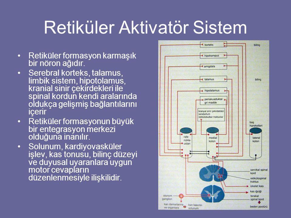 Retiküler Aktivatör Sistem