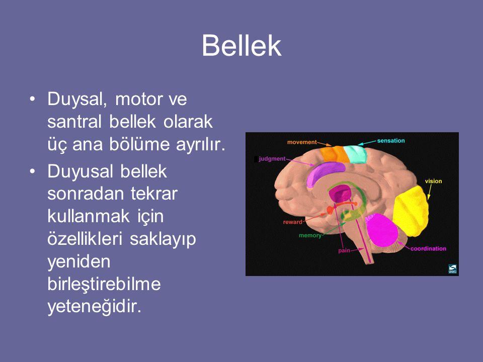 Bellek Duysal, motor ve santral bellek olarak üç ana bölüme ayrılır.