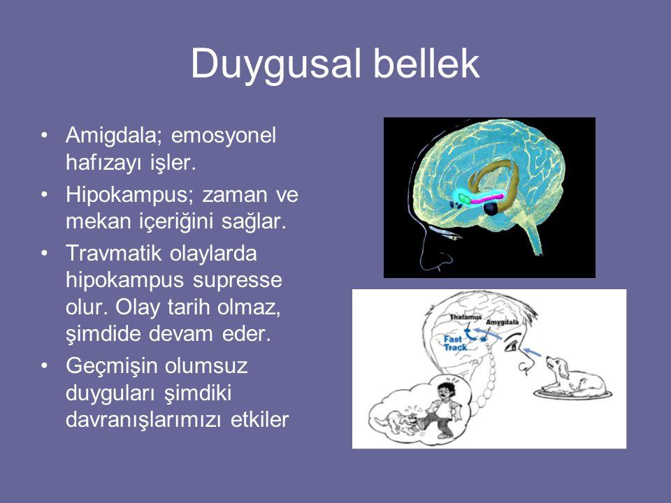 Duygusal bellek Amigdala; emosyonel hafızayı işler.