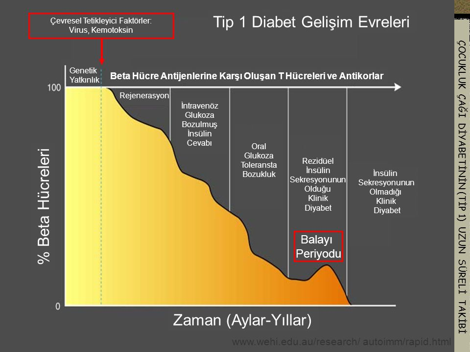 Tip 1 Diabet Gelişim Evreleri