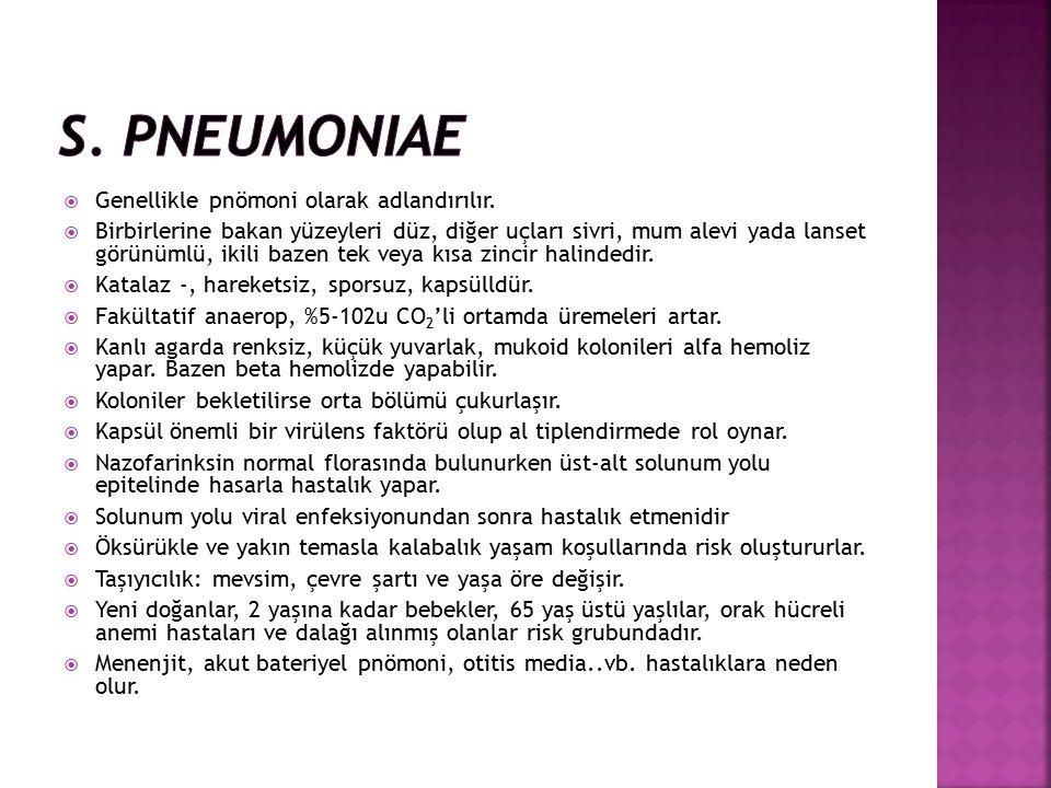 S. pneumoniae Genellikle pnömoni olarak adlandırılır.