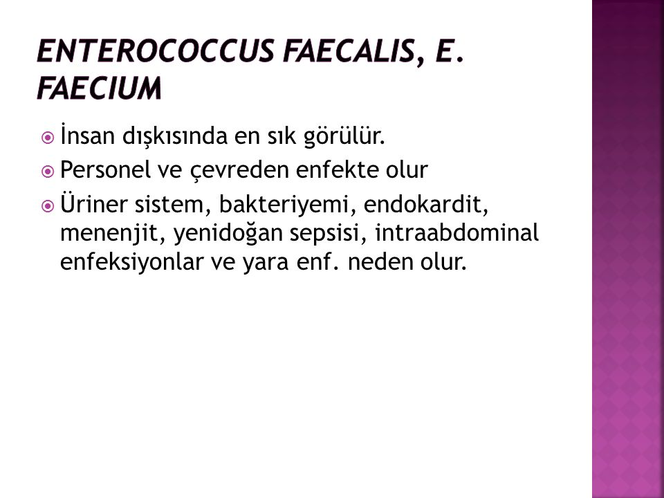 Enterococcus faecalis, E. faecium