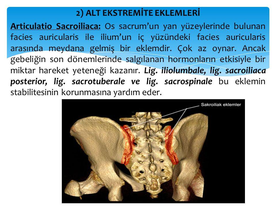 2) ALT EKSTREMİTE EKLEMLERİ Articulatio Sacroiliaca: Os sacrum'un yan yüzeylerinde bulunan facies auricularis ile ilium'un iç yüzündeki facies auricularis arasında meydana gelmiş bir eklemdir.