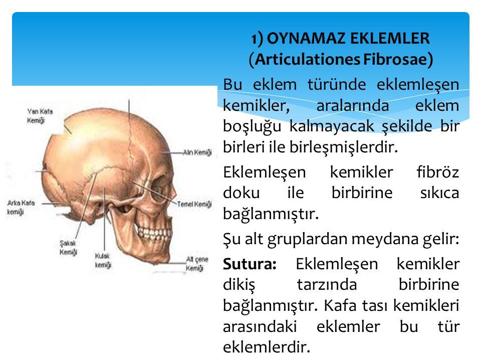 1) OYNAMAZ EKLEMLER (Articulationes Fibrosae) Bu eklem türünde eklemleşen kemikler, aralarında eklem boşluğu kalmayacak şekilde bir birleri ile birleşmişlerdir.