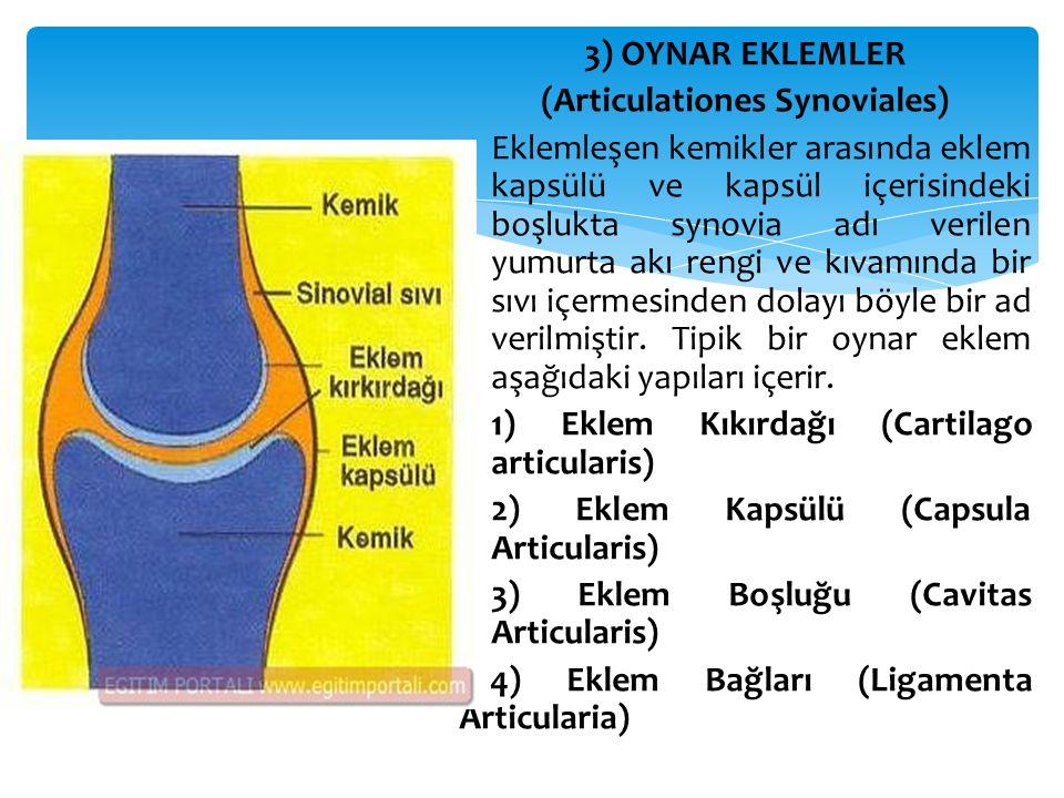 (Articulationes Synoviales)