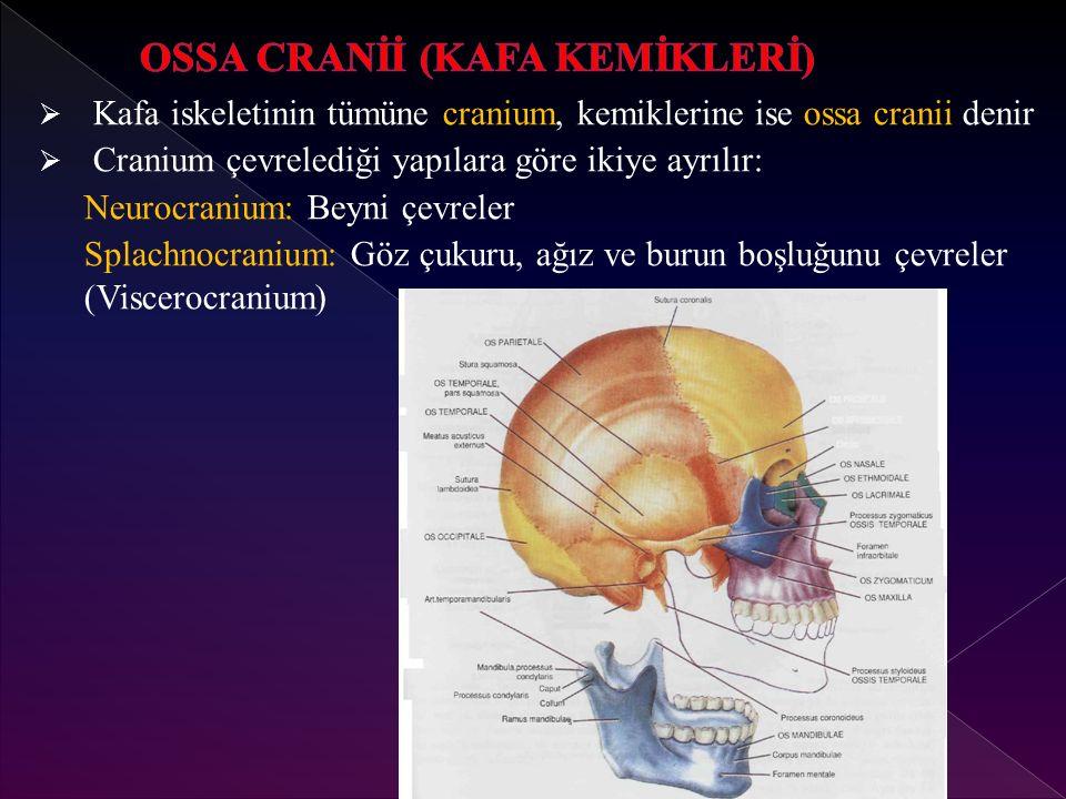 OSSA CRANİİ (KAFA KEMİKLERİ)