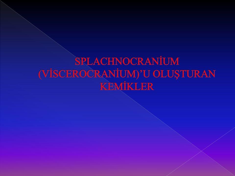SPLACHNOCRANİUM (VİSCEROCRANİUM)'U OLUŞTURAN KEMİKLER