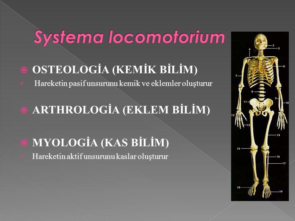 Systema locomotorium OSTEOLOGİA (KEMİK BİLİM)